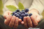 خواص درمانی خواص ضدسرطانی میوه ها بر اساس رنگ در میوه درمانی 1