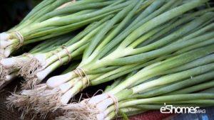 شناخت انواع سبزیجات خواص درمانی سبزیجات ، پیازچه