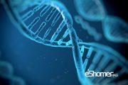 چین با فناوری کریسپر موفق به مقاومت موشها به ویروس اچ آی وی شد