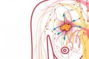پیشگیری از سرطان سینه با رژیم غذایی با فیبر زیاد
