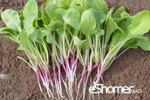 مجله خبری ایشومر شناخت-انواع-سبزیجات-،-خواص-درمانی-سبزیجات-،-برگ-تربچه-مجله-خبری-ایشومر-300x201 شناخت انواع سبزیجات ، خواص درمانی سبزیجات ، برگ تربچه 3 سبک زندگي میوه درمانی  سبزیجات خواص درمانی سبزیجات تربچه برگ تربچه