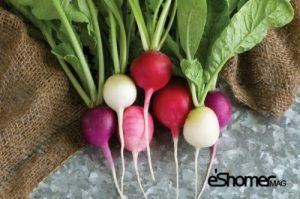 مجله خبری ایشومر شناخت-انواع-سبزیجات-،-خواص-درمانی-سبزیجات-،-تربچه-2-مجله-خبری-ایشومر-300x199 شناخت انواع سبزیجات ، خواص درمانی سبزیجات ، برگ تربچه 2 سبک زندگي میوه درمانی  کاهش وزن سبزیجات خواص درمانی سبزیجات تربچه برگ تربچه افزایش ایمنی بدن