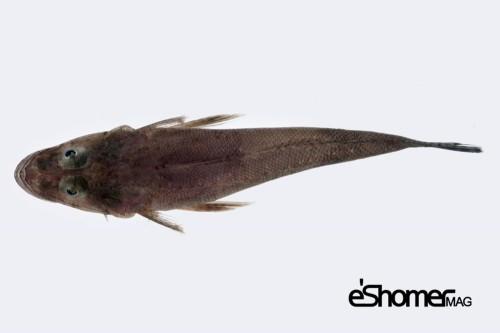 شناخت و نحوه پخت انواع ماهی جنوب در آموزش آشپزی ، ماهی زمین کن