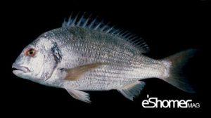 مجله خبری ایشومر شناخت-و-نحوه-پخت-انواع-ماهی-جنوب-در-آموزش-آشپزی-،-ماهی-سبیتی-مجله-خبری-ایشومر-300x168 شناخت و نحوه پخت انواع ماهی جنوب در آموزش آشپزی ، ماهی سبیتی آشپزی و غذا سبک زندگي  نحوه پخت انواع ماهی ماهی جنوب ماهی سبیتی آموزش آشپزی