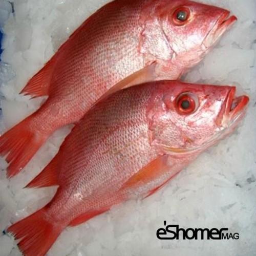 شناخت و نحوه پخت انواع ماهی جنوب در آموزش آشپزی ، ماهی سرخو