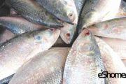 شناخت و نحوه پخت انواع ماهی جنوب در آموزش آشپزی ، ماهی صبور