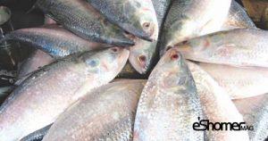 مجله خبری ایشومر شناخت-و-نحوه-پخت-انواع-ماهی-جنوب-در-آموزش-آشپزی-،-ماهی-صبور-مجله-خبری-ایشومر-300x158 شناخت و نحوه پخت انواع ماهی جنوب در آموزش آشپزی ، ماهی صبور آشپزی و غذا سبک زندگي  نحوه پخت انواع ماهی ماهی جنوب ماهی صبور آموزش آشپزی