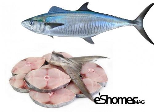 مجله خبری ایشومر شناخت-و-نحوه-پخت-انواع-ماهی-جنوب-در-آموزش-آشپزی-ماهی-شیر-مجله-خبری-ایشومر شناخت و نحوه پخت انواع ماهی جنوب در آموزش آشپزی ، ماهی شیر آشپزی و غذا سبک زندگي نحوه پخت انواع ماهی ماهی جنوب ماهی شیر آموزش آشپزی