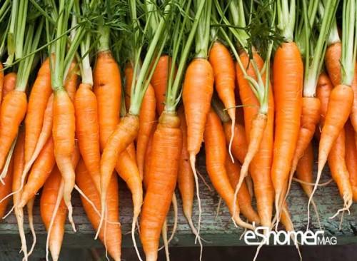 بهترین روش نگهداری هویج در یخچال و فریزر