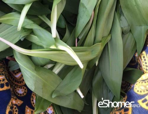 شناخت انواع سبزیجات ، خواص درمانی سبزیجات ، والک ( سیر کوهی )