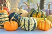 شناخت انواع سبزیجات ، خواص درمانی سبزیجات ، کدو حلوایی