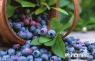 بلوبری و خواص ضد سرطانی آن در میوه درمانی 2