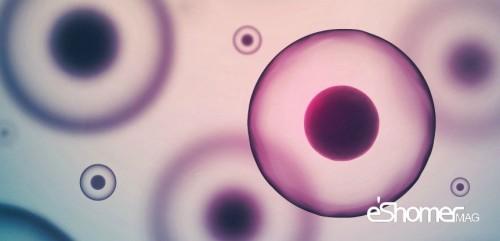 تحولات درمانی جدید در سیستم نخاعی بدن با الهام از حیوانات