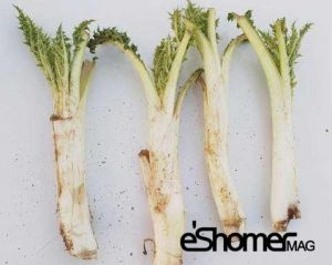 شناخت انواع سبزیجات ، خواص درمانی سبزیجات ، کنگر